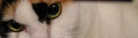 Eyesjpg
