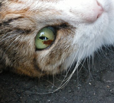 Eye_2