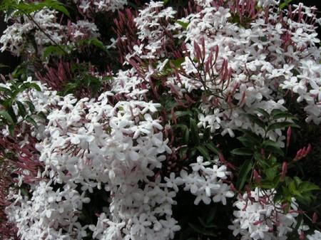 Flower3jpg