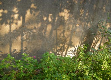 Lili_garden_2