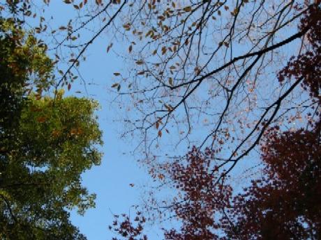 Fall_in_10