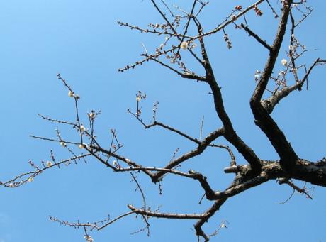 Spring_has_comejpg