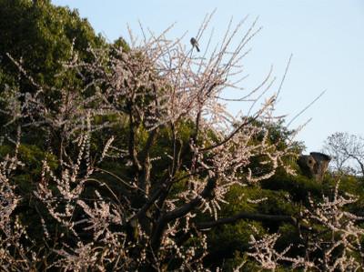 Bird_jpg