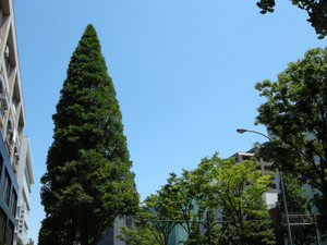 Photo_21_3