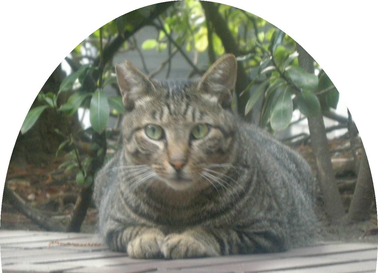 Cat89